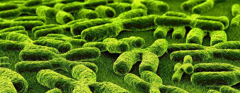 diagnostic genetic sciences